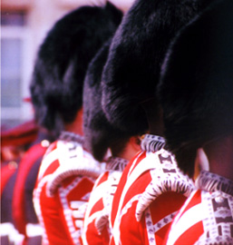 Side view of Black Bear fur hats of four Buckingham Palace Guard's Regiment.