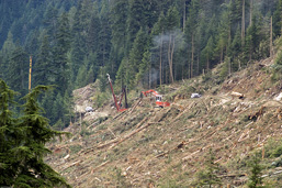 A panoramic view of a cleared side of a mountain where clearcutting occurred.