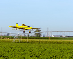 An aircraft flies at low altitude over a field crop in order to spray chemical products.
