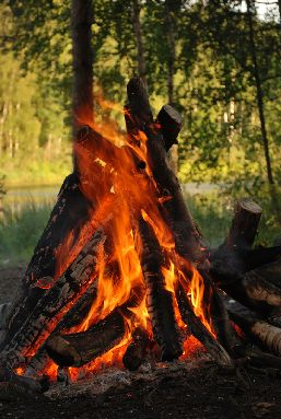 Close-up of a camp fire in a forest environment.