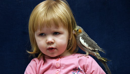 Young girl with a Cockatiel on her shoulder.