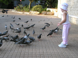 A young girl feeds twenty pigeons standing at her feet on the pavement.