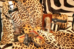 Objects made of feline and zebra skins: coasters, suitcase, wallet, book support, lamp, whole leopard and zebra furs.