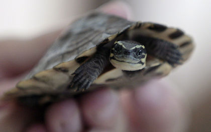 China seizes 620 turtles and tortoises, most endangered, in shipment from Vietnam