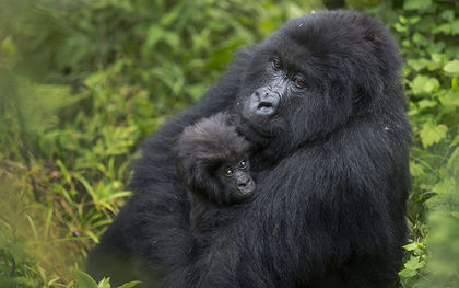 Rwanda names to 24 baby gorillas to promote conservation, draw tourists