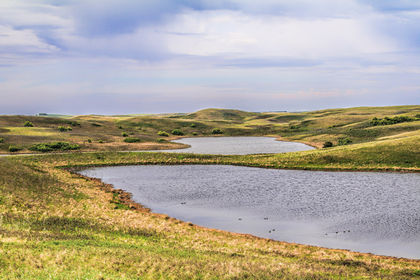 NCC scientist pens essay to save world's most endangered ecosystem, grasslands