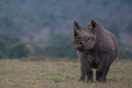 Rhino poaching down in South Africa but conservationists are still worried