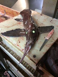 Alien of the Deep: 'Winged' Green-Eyed Creature Stuns Fishermen