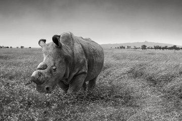 On Tinder, Swipe Right to Save This Endangered Rhino