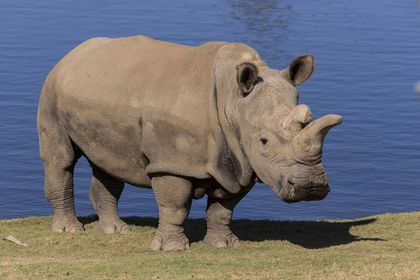 In Photos: The Last 5 Northern White Rhinos