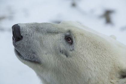 Google aims to provide key research into changing polar bear habitat