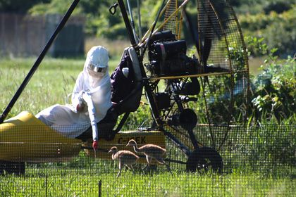 Birds of a Feather: Whooping Cranes Need Parents More Like Them