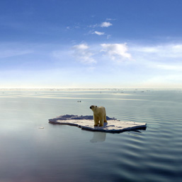 A Polar Bear floats on ice in the middle of the ocean.