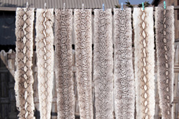 Eight snake skins hang on a line to dry.