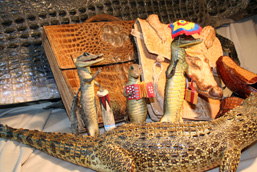 Various objects made from crocodilian anatomical parts: naturalized caimans, crocodilian skin and crocodilian skin shoe, purse and schoolbag.