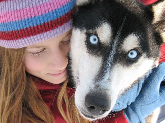 Image result for husky dog, they like human embraces