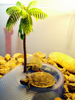 Two Red-eared Sliders rest on a plastic structure on which is fixed a very small artificial palm tree.